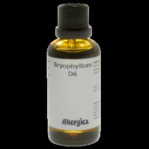 Bryophylum D6